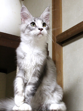 Clair_kitten1_18080101