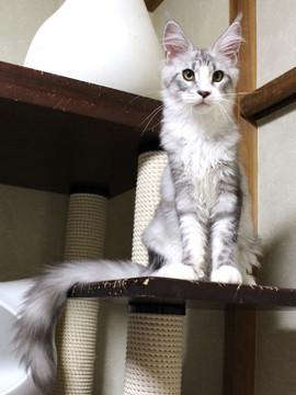 Clair_kitten1_18080102