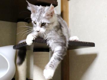 Clair_kitten1_18080104