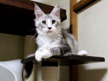 Clair_kitten1_18080105