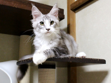 Clair_kitten1_18080106