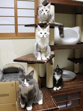 Kittens_18073101