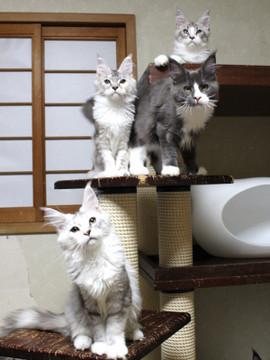 Kittens_18073102