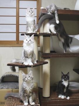Kittens_18073103