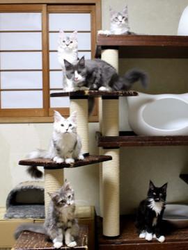 Kittens_18073104_2