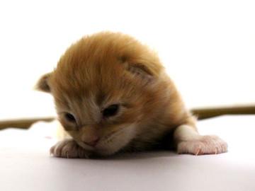 Mariage_kitten_18080604