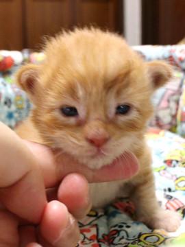 Mariage_kitten_18080802