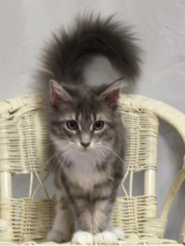 Bouquet_kitten3_18081205