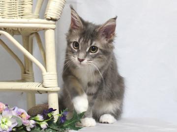 Bouquet_kitten3_18081209