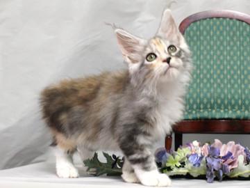 Waco_kitten1_18081202