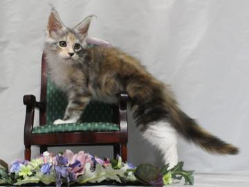 Waco_kitten1_18081204