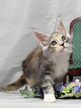 Waco_kitten1_18081206
