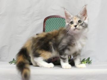 Waco_kitten1_18081208