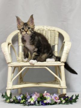 Waco_kitten2_18081201