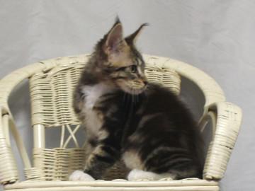 Waco_kitten2_18081202