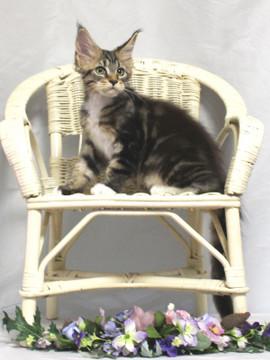 Waco_kitten2_18081205