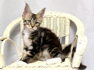 Waco_kitten2_18081207