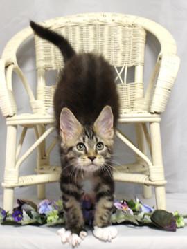 Waco_kitten2_18081209