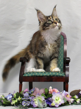 Waco_kitten4_18081201