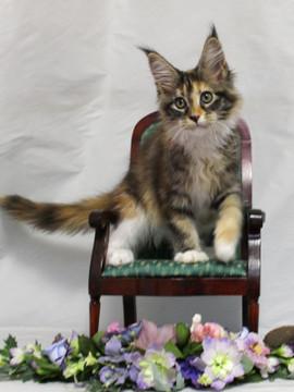 Waco_kitten4_18081202