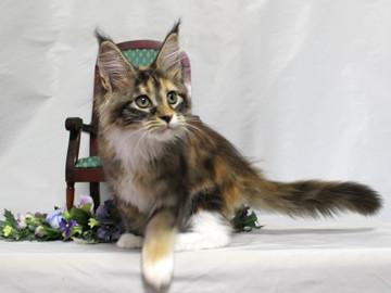Waco_kitten4_18081204