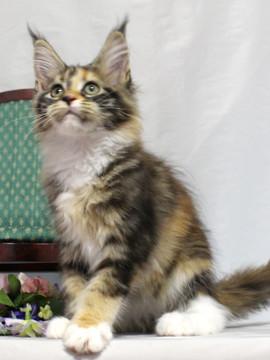 Waco_kitten4_18081205