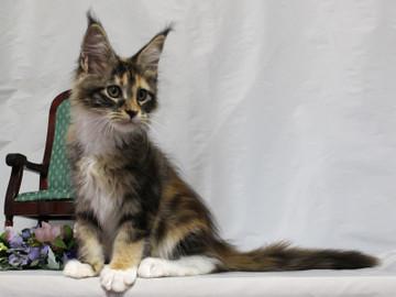Waco_kitten4_18081206