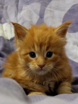 Mariage_kitten_18082303
