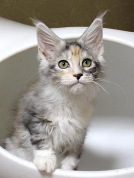 Waco_kitten1_18082701