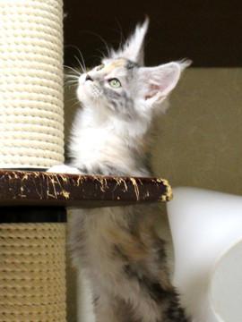 Waco_kitten1_18082702