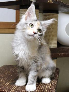 Waco_kitten1_18082703