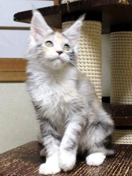 Waco_kitten1_18082704_2