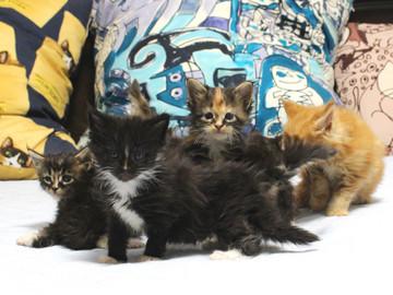 Kittens_18082901