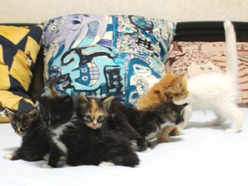 Kittens_18082902