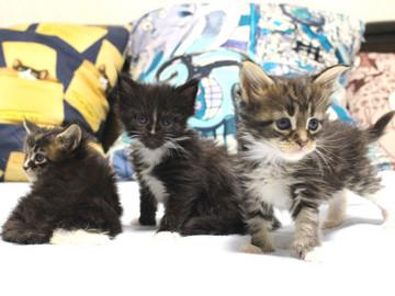 Kittens_18082903