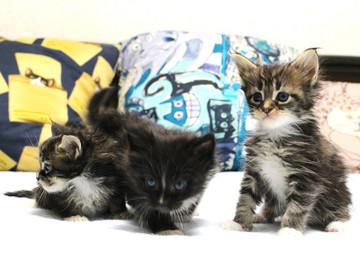 Kittens_18082904