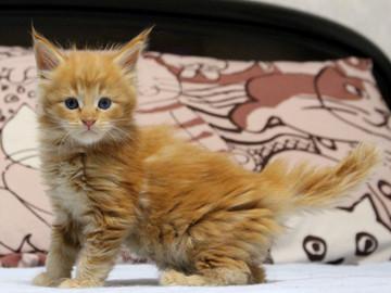 Waco_kitten1_18082706