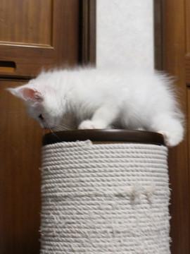 Waco_kitten1_18082707