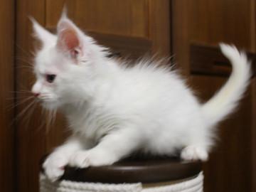 Waco_kitten1_18082708