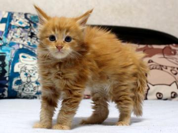 Waco_kitten1_18082709