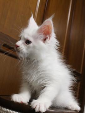 Waco_kitten1_18082710