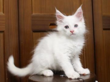 Waco_kitten1_18082711