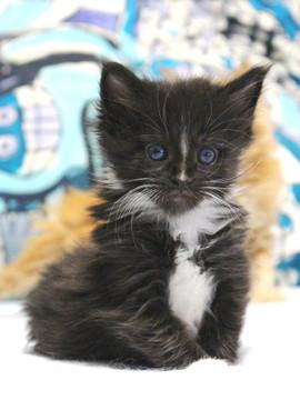 Waco_kitten1_18082713