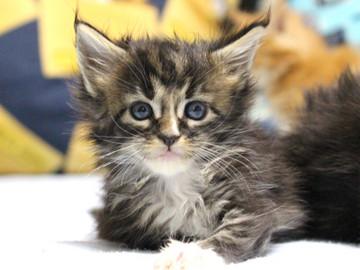 Waco_kitten1_18082714