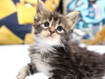 Waco_kitten1_18082715
