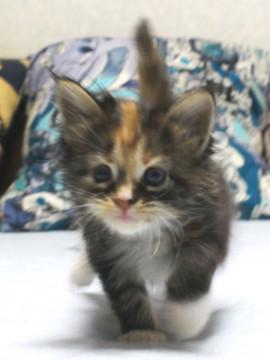 Waco_kitten1_18082716