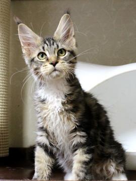 Waco_kitten2_18083001