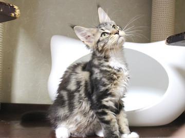 Waco_kitten2_18083002