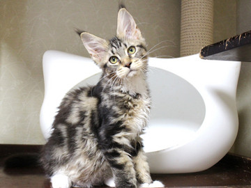 Waco_kitten2_18083003
