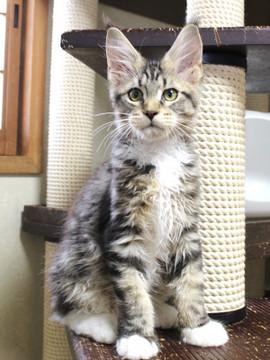 Waco_kitten2_18083004